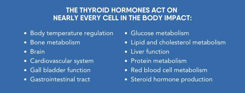 Impact of Thyroid Hormones on the Body